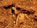 Termites (31559780962).jpg