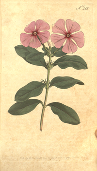 The Botanical Magazine, Plate 248 (Volume 7, 1794).png
