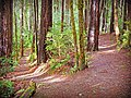 The Oregon Redwood Trail, Rogue River Siskiyou National Forest (24627998594).jpg