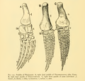 The Osteology of the Reptiles-212 ghyv dfg.png