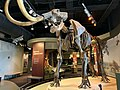 The Woolly Mammoth and Native American Gallery at Discovery Park of America.jpg