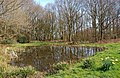 The village pond at Trimpley (1), Worcs (geograph 3909840).jpg