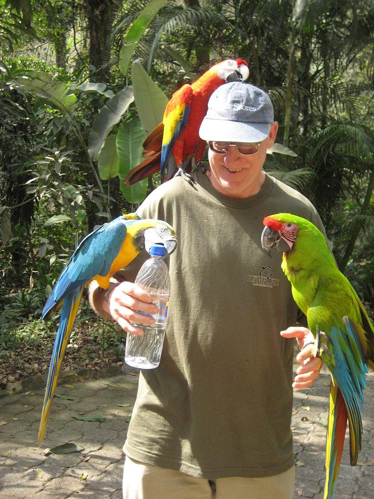 File Three Macaws Macaw Mountain Bird Park Honduras 6a