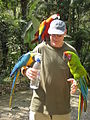 Three macaws -Macaw Mountain Bird Park, Honduras-6a.jpg