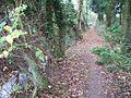 Through the woods - geograph.org.uk - 1579654.jpg