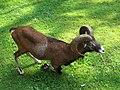 Tierpark Neumünster IMG 9338.JPG