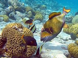 Arowana fish price in bangalore dating