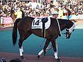 Tokyo Daishoten Day at Oi racecourse (31865531751).jpg