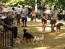 Manhattan Dog Run