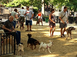 Dog park - The recently renovated Tompkins Square Park dog run was the first in New York City, and it was recently named one of the top five dog parks in the United States by Dog Fancy magazine.
