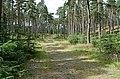 Tomvaich Wood by Grantown - geograph.org.uk - 212746.jpg