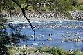 Tongariro River (6).JPG