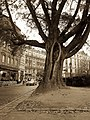 Toulouse - Rue Riguepels - 20121123 (1).jpg