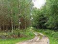 Track through Burnt Ground Wood - geograph.org.uk - 176383.jpg