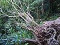 Trail of Mount Awa, Okinawa 03.jpg