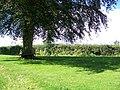 Tree, Corton - geograph.org.uk - 1479413.jpg