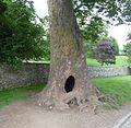 Tree - panoramio (24).jpg
