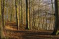 Trees along the Hald Sø Viborg Commune Danemark.jpg