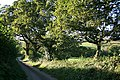 Tresmeer, lane with oak trees - geograph.org.uk - 557006.jpg