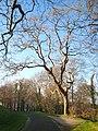Twisted oak - geograph.org.uk - 1609012.jpg