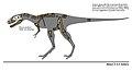Tyrannosaurid IVPP V4878.JPG