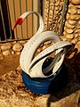 Tyre Swan, Nizana Educational Community, Western Negev, Israel ברבור מצמיג, קהילה חינוכית ניצנה - panoramio.jpg