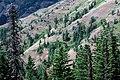 Umatilla Breaks, Umatilla National Forest (36044529264).jpg
