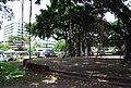 Under the banyan tree.jpg