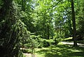 University of Tennessee Arboretum - exotic conifers.JPG