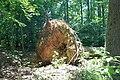 Uprooted Tree Hurricane Sandy (14378630047).jpg