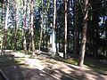 Utena, Lithuania - panoramio (43).jpg