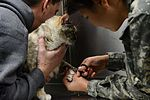 VTF takes care of animal companions 160127-F-IW330-151.jpg