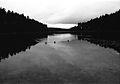 Valkalampi - Ducks (14894158917).jpg