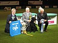 Vbos The Kentuckian BIS Crufts 2011.jpg