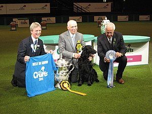 Vbos The Kentuckian - Sh Ch. Vbos The Kentuckian, after winning Best in Show at Crufts in 2011