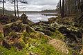 Venejärv. Põhja-Kõrvemaa Nature Reserve..jpg