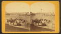 """View of """"Mexican burros"""" with building in the background, from Robert N. Dennis collection of stereoscopic views.png"""