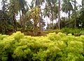 View of a Horticultural Nursery at Kadiyam 02.jpg