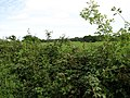 View towards Somerton Wood from Aldborough Road - geograph.org.uk - 538418.jpg