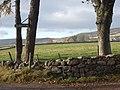 View towards Tillyfruskie - geograph.org.uk - 604539.jpg