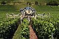Vignoble Champagne Cl j Weber07 (23049485634).jpg