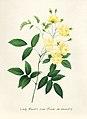 Vintage Flower illustration by Pierre-Joseph Redouté, digitally enhanced by rawpixel 72.jpg