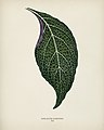 Vintage illustrations by Benjamin Fawcett for Shirley Hibberd digitally enhanced by rawpixel 85.jpg