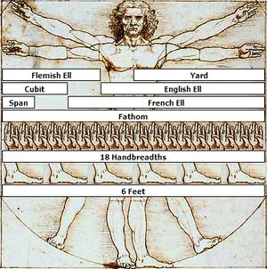 Vitruvian Man Measurements.png