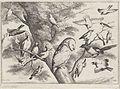 Vogels in een boom.jpeg
