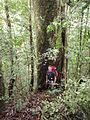 Volunteer in the forest.jpg