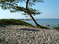 Vourvourou beach sithonia 01.jpg