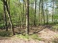 Vyžlovský rybník (034).jpg