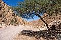 Wadi Gnai 2020-03-08-18.jpg
