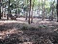 Walayar Deer Park - panoramio (6).jpg